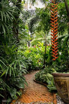Shade Garden Flowers And Decor Ideas Green Path By Thomas Kaye On Small Tropical Gardens, Tropical Garden Design, Tropical Backyard, Tropical Plants, Bali Garden, Balinese Garden, Dream Garden, Garden Paths, Palm Trees Landscaping