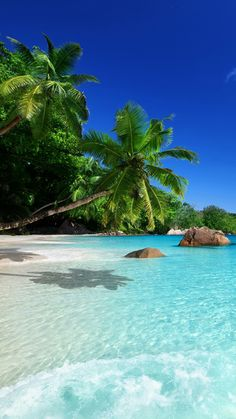 Tropical Beaches With Palm Trees Vacation Places, Dream Vacations, Vacation Spots, Places To Travel, Vacation Destinations, Beach Pictures, Nature Pictures, Most Beautiful Beaches, Beautiful Places