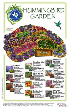 10 Butterfly Garden Design Ideas, Elegant as well as Gorgeous - New ideas Easy Garden, Lawn And Garden, Hummingbird Plants, Hummingbird House, Hummingbird Nectar, Design Jardin, How To Attract Hummingbirds, Flowers For Hummingbirds, Humming Bird Feeders