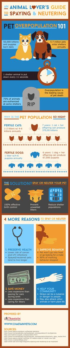 Infographic: An Animal Lover's Guide to Spaying and Neutering