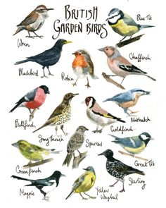 British Garden Birds Watercolor Painting by CathyEliot on Etsy, $20.00