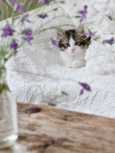 lavender's cottage...