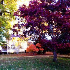 Vibrant fall leaves. Walking through NW