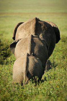 Eléphants en Afrique du Sud
