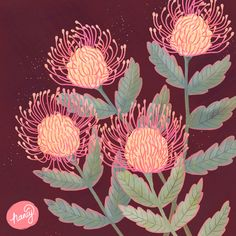 Artichoke Flower, Protea Art, Australian Wildflowers, Tattoo Sketches, Pin Cushions, Painting Inspiration, Artsy Fartsy, Plant Leaves, Floral Design