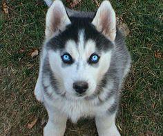 siteler puppies   Mark Aldrich puppies - Resim Paylaş, Aşk resimleri, araba resimleri ...