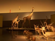 science museum Granada I know its sad they are there but they did all die natural deaths