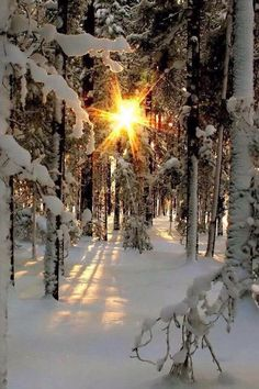 Winter Sun and Snow Winter Szenen, Winter Sunset, Winter Time, Winter Christmas, Winter Images, Winter Pictures, Winter Photography, Nature Photography, Snow Scenes
