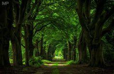 The Dark Forest Sallandse Heuvelrug National Park Martin Podt Photography