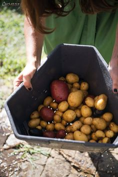 Paul Potato: Kartoffelernte{Zeit} Fruit, Food, Ad Home, Essen, Meals, Yemek, Eten