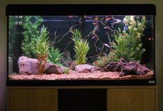 riverbed aquarium