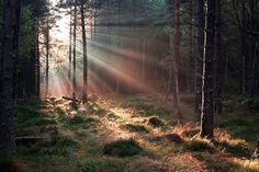 It's all about the light by Alan Cowper. On the way to Bennachie
