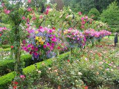 Butchart Gardens: Beautiful baskets in the Rose Garden. #butchartgardens #flowers #roses