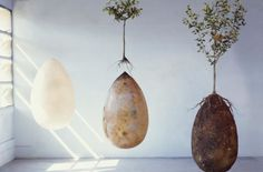 Goodbye coffins! These organic burial pods will turn you into a tree when you die