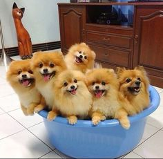 A Bowl Full of Happiness!