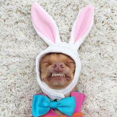 Easter Tuna... Ewe phounds kinda gwoos!