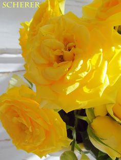 Lisa Scherer Art: Yellow Gold Rose Flower Arrangement