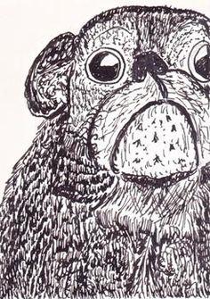 Old pug - pen & ink
