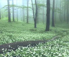 Enchanted magical forest woods in the misty fog - Nature photography