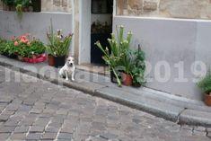 【PARIS】【サンジェルマン界隈】2019年6月22日 : フランス落書き帳 Plants, Dog, Flora, Plant, Planets