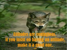 #Attitudes are #contagious, if you #insist on having an #attitude, make it a #good one. ~♥♥~