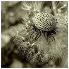 about romania, me, my city, my life, my photos. My Photos, Flowers, Plants, Hip Bones, Florals, Plant, Flower, Bloemen, Planting