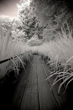 The Aisle (infrared). by coulombic, via Flickr