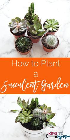 pp:   I love succulents as home decor. This tutorial is so easy anyone can grow their own little garden in their home!