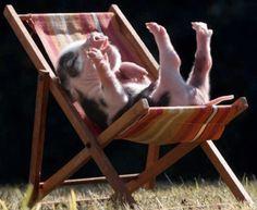 Piggy wants to sleep