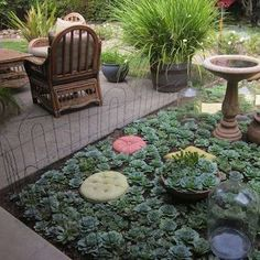 Succulent Garden, notice that it is same plant but, there are things added to break up the monotanity.