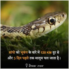general knowledge in hindi general knowledge 2019 common general knowledge questions and answers general knowledge 2019 pdf general knowledge quiz general knowledge 2020 general knowledge 2018 general knowledge 2019 in hindi General Knowledge Book, Gernal Knowledge, Knowledge Quotes, Wow Facts, Real Facts, Google Facts, Amazing Science Facts, Amazing Facts, Physiological Facts