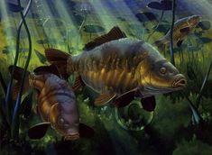 Fishing Knots, Carp Fishing, Saltwater Fishing, Fish Artwork, Fishing Pictures, Fish Drawings, Fishing Girls, Freshwater Fish, Underwater Photography