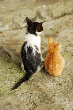 Cute kittens by Mars Chen Cute Kittens, Cats And Kittens, Cute Baby Animals, Animals And Pets, Funny Animals, Funny Cats, I Love Cats, Crazy Cats, Gatos Cats