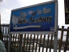 Going to the Marine Sanctuary, Apo Island Marines, Oriental, Broadway Shows, Island, Black, Block Island, Islands