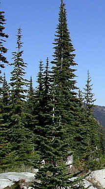 17 Best Alpine Christmas Images Alpine Christmas Tree Rustic