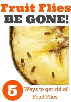 Fruit Flies BE GONE!  5 Ways to get rid of fruit flies. Be ready and armed for a fruit fly free home!
