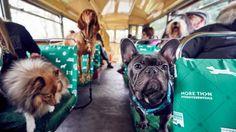 A Londra il primo bus turistico a misura di cane