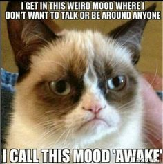 Grumpy cat, grumpy cat pictures, grumpy cat photos ...For more hilarious memes and funny stuff visit www.bestfunnyjokes4u.com/lol-best-funny-cartoon-joke-2/