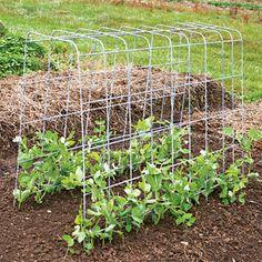 DIY Trellis: Organic Gardening