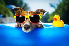 Pet Safety In The Great Outdoors - Home Wizards