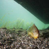 Zürichsee / Tauchen im Süsswasser / Galerie | Nies.ch Lake Zurich, Fresh Water, Diving, Pets, Animals, Animales, Scuba Diving, Animaux, Animal