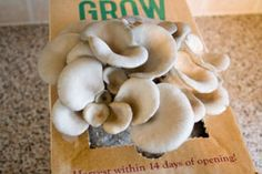 watching your mushrooms grow. growing mushrooms in used coffee grounds? nifty idea!