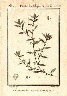 "buffon botanical french 1775 engraving 4 x 6""  $25 - 04"