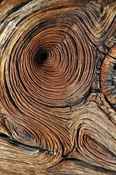 Ideas for tree wood texture inspiration Texture Design, Wood Texture, Texture Art, Natural Texture, Natural Forms, Wood Patterns, Patterns In Nature, Textures Patterns, Henna Patterns