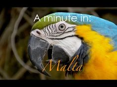 Travel Videos, Video Footage, Malta, Youtube, Malt Beer, Youtubers, Youtube Movies, Grout