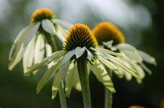 sunny Sunnies, Flowers, Plants, Photography, Photograph, Sunglasses, Fotografie, Photoshoot, Shades