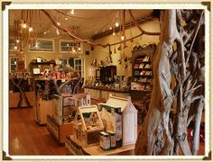 Visit Paxton Gate Curiosities for Kids in SF