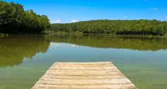 #forest #fun #green #lake #nature #pier #relax #swimming #water