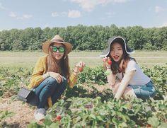 🍓🍓🍓First time #strawberrypicking #strawberrys #happysaturday