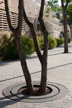 Grille d'arbre et trottoir du bois habité